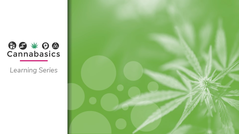 Cannabasics: An Introductory Online Learning Series